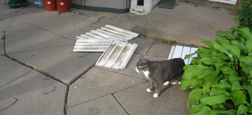 Cricket surveys the damages.