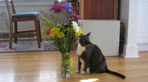 Yes, I keep our flowers on the floor.