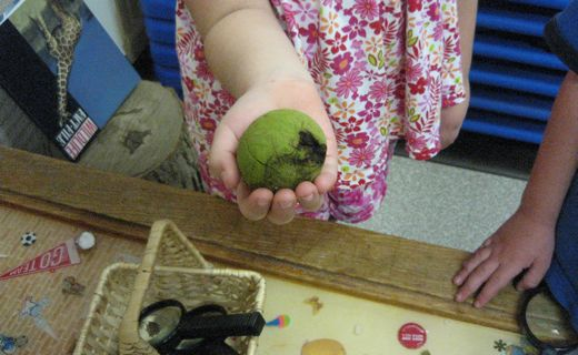 Behold.  A walnut.