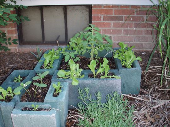 Grow, tomatoes!